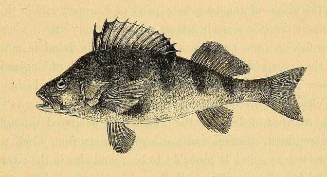 PerchhistoryofbritishVol1.1836